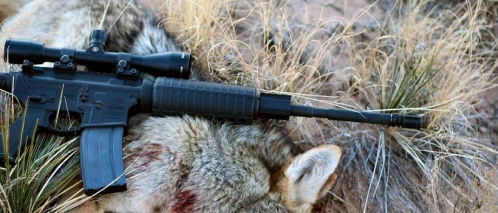 Best Scope For AR-15 Coyote Hunting